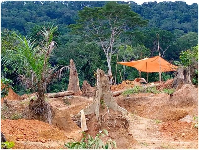 Miners And Loggers Fight Over Community Forest In Gbarpolu